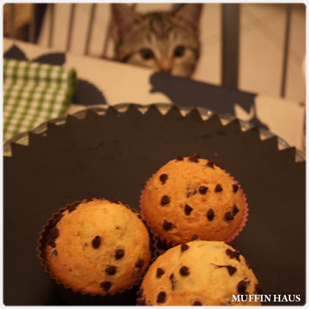 muffin gocce di cioccolato 3